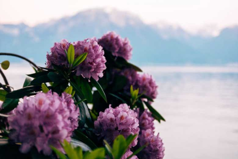 Purple flowers and sea