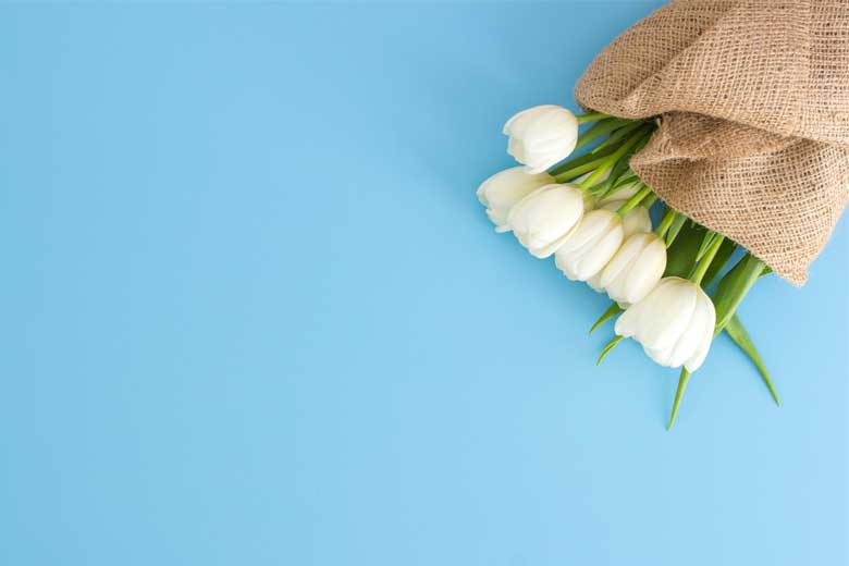 A bunch of white tulips on blue background