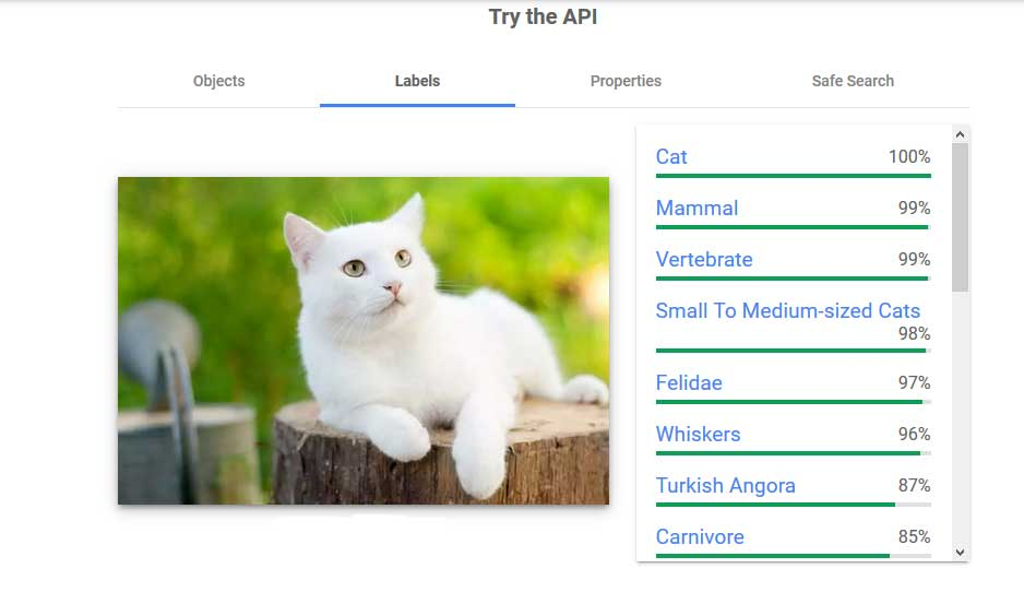 Google vision analysis of the image with a white cat